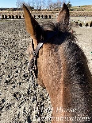 舌を出す馬の再調教