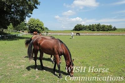 乗馬 放牧風景
