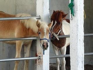 馬同士のホースコミュニケーション