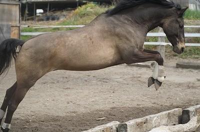 馬のバスキュール