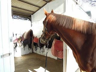 乗馬クラブの新しい鞍置場