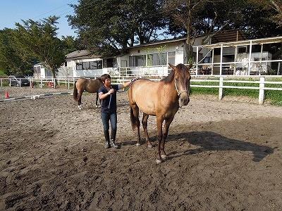 馬を愛する!