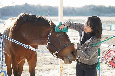 馬を幸せにしているか