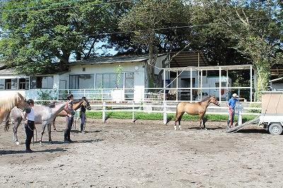 特殊な乗用馬の調教方法