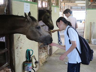 いい馬は普段の接し方で作られる