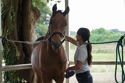 馬と相思相愛になろう!
