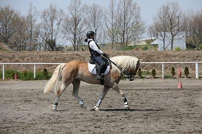 馬に習う。謙虚に