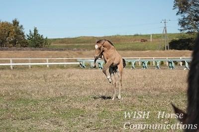 仔馬のジャンプ