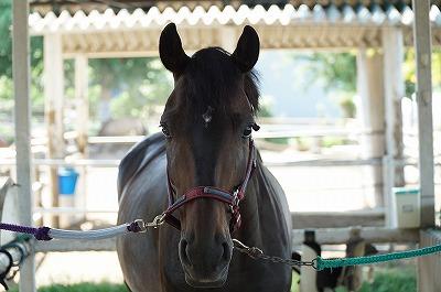 馬を太らせるには当たり前のことを当たり前にするだけ