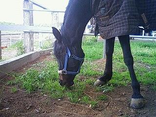 木陰パドックの馬