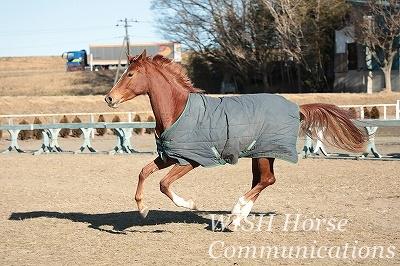 我慢させない乗馬