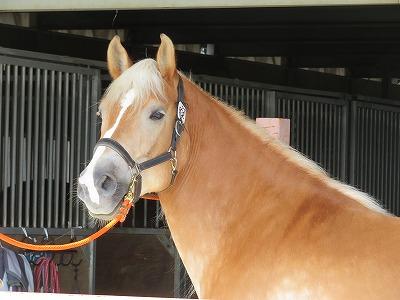 馬の賢さとマナーは作れる