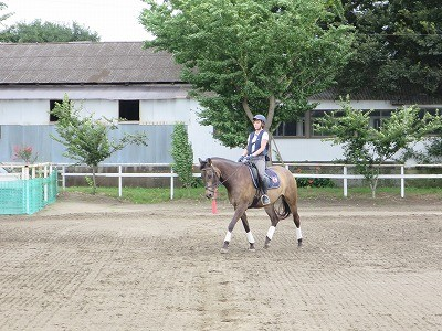 馬と一緒に楽しい乗馬