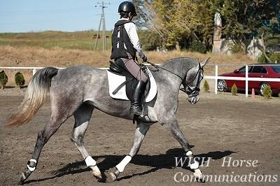 乗りやすい馬を育てる