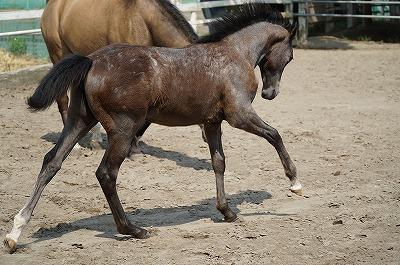 馬を健康に、自由に!