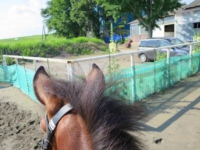 新馬調教 経験値を増やす