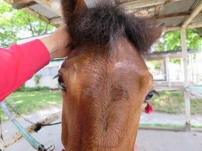 新馬調教 信頼関係を作る