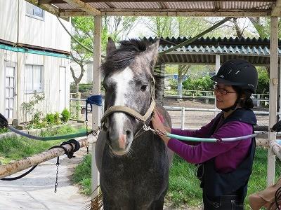 馬と仲良くなる練習