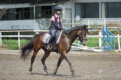 幸せな馬に乗ろう