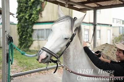 馬を喜ばせよう