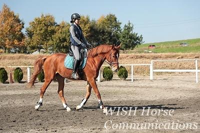 優しい繊細な乗馬