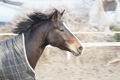 自由に疾走する馬