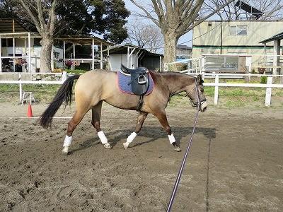 人も馬も身体を動かしているのは気持ち