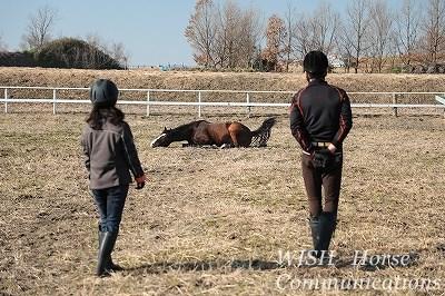 馬を見守る楽しさ