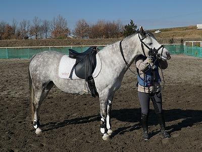 QOLの高い幸せそうな馬