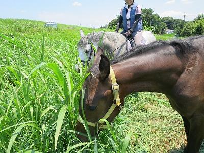 馬の馴致教育