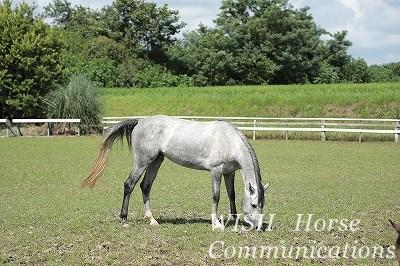 乗馬の希望
