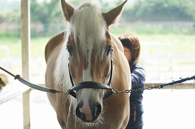 馬に伝えるのに愛以外の何があるの?