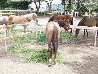 馬をコミュニケーション上手にする放牧