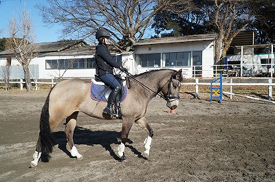 王道を進めば馬に優しい乗馬になる