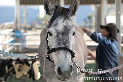 馬を性格良く育てる