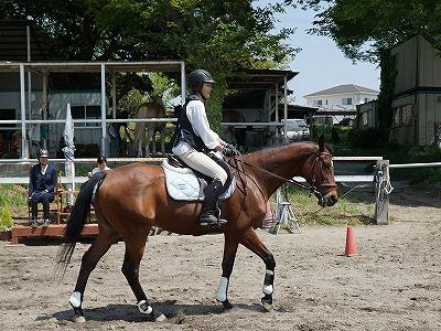 馬と仲良くなれる特別な乗馬