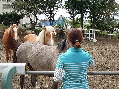 馬に好かれる人