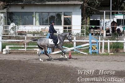 二歳の新馬調教
