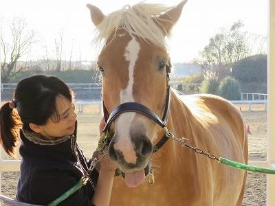可愛い馬の瞳