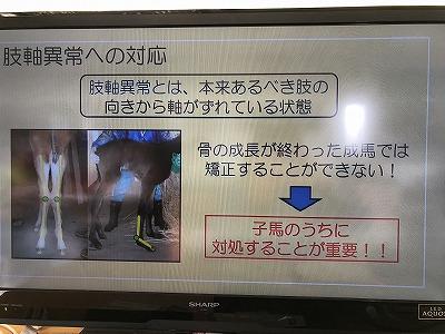 子馬の蹄管理の重要性