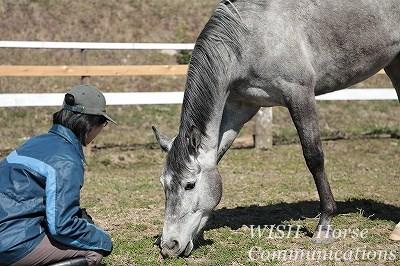 乗馬は愛馬精神