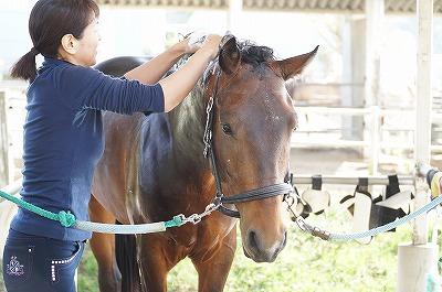 表情豊かな馬に育てる
