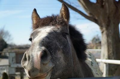 甘え顔の馬と青空