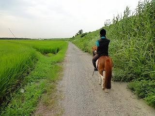 新緑の中で乗馬体験
