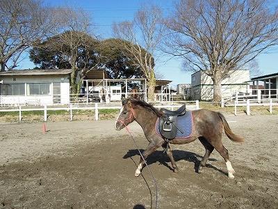 初めて鞍を乗っけたよ