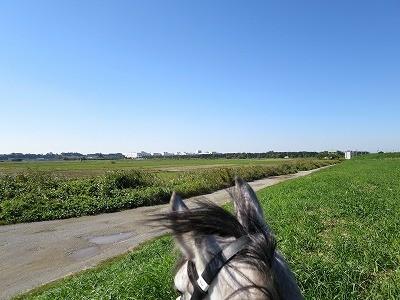馬との美しい風景