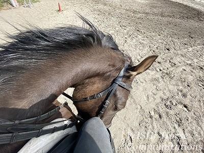 馬の背中からの景色