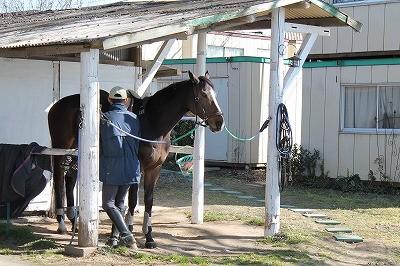 コミュニケーション志向の乗馬クラブ