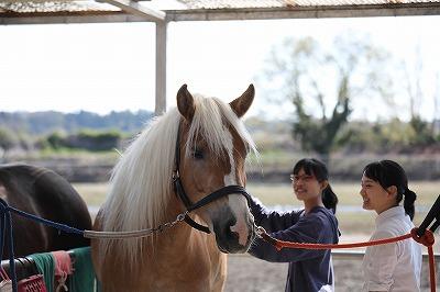 体験乗馬へようこそ!