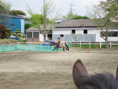 馬の乗り心地